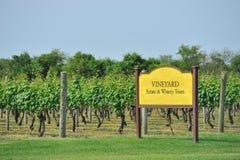 Het gebied van de wijngaard Royalty-vrije Stock Fotografie