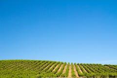 Het gebied van de wijngaard Royalty-vrije Stock Afbeelding