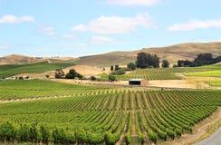 Het gebied van de wijngaard in napavallei Royalty-vrije Stock Foto's