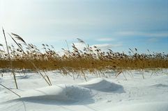 Het gebied van de winter Royalty-vrije Stock Foto's