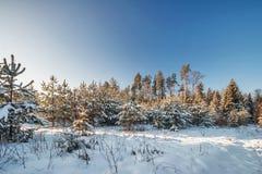 Het gebied van de winter onder blauwe hemel Stock Afbeeldingen