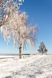 Het gebied van de winter op een zonnige ijzige dag Stock Foto's