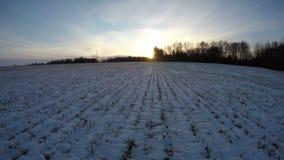 Het gebied van de wintertijdtarwe met groene spruiten behandelde sneeuw en zonsondergang, tijdtijdspanne 4K stock videobeelden