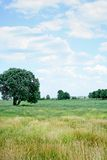Het gebied van de zomer royalty-vrije stock afbeeldingen
