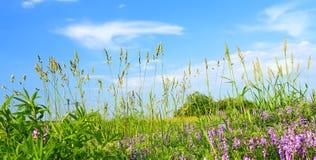 Het gebied van de zomer Royalty-vrije Stock Foto