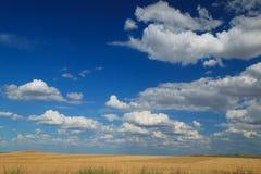 Het gebied van de zomer en bewolkte hemel stock foto's