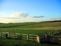 Het gebied van de zomer en blauwe hemelen Royalty-vrije Stock Afbeeldingen