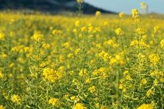 Het gebied van de zomer met bloemen Stock Afbeeldingen