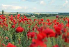 Het gebied van de zomer met bloemen Stock Foto's