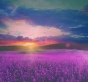 Het gebied van de zomer met bloemen Royalty-vrije Stock Afbeelding