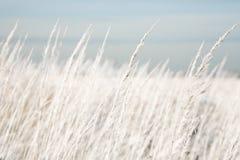 Het gebied van de zomer met hoog gras Royalty-vrije Stock Foto's