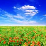 Het gebied van de zomer van rode papavers op een achtergrond blauw s Royalty-vrije Stock Afbeeldingen