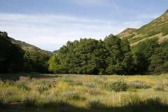 Het gebied van de zomer wildflower Stock Afbeelding