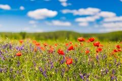 Het gebied van de de zomerpapaver onder blauwe hemel en wolken De mooie weide van de de zomeraard en bloemenachtergrond stock foto