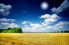 Het gebied van de zon en van de tarwe. Stock Foto's