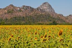 Het gebied van de zonnebloem met berg Royalty-vrije Stock Afbeelding