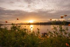 Het gebied van de zonsondergangbloem Royalty-vrije Stock Afbeeldingen