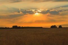 Het gebied van de zonsondergangtarwe Stock Afbeelding