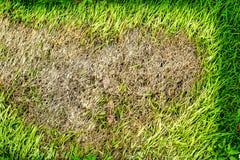 het gebied van droog gras kan niet groeien, iets dekking dit en niet heeft zonlicht royalty-vrije stock afbeelding