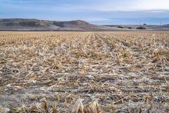 Het gebied van het graan na oogst stock foto's