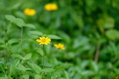 Het gebied van het aardgras met bloem Stock Fotografie