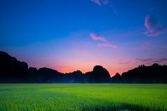 Het gebied van het aardpadieveld tijdens avond met kleurrijke hemel en mou Stock Afbeelding