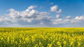 Het gebied van het bloesemkoolzaad en blauwe hemel Stock Foto's