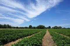 Het gebied van het de lentelandbouwbedrijf royalty-vrije stock fotografie