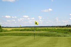 Het gebied van het golf met gele lissen Royalty-vrije Stock Foto's