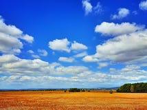 Het gebied van het graan in de zomer met blauwe hemel Royalty-vrije Stock Foto's