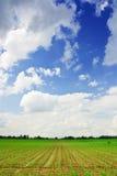 Het gebied van het graan en het blauwe concept van de hemellandbouw stock foto's