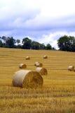 Het gebied van het graan na slijmerig Stock Afbeeldingen