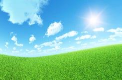 Het Gebied van het gras Stock Foto's