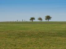 Het gebied van het gras Royalty-vrije Stock Foto
