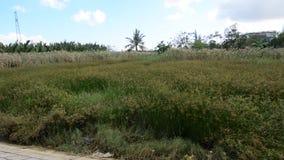Het gebied van het gras stock footage