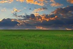 Het gebied van het gras Stock Afbeeldingen