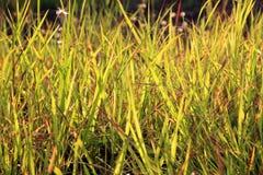 Het gebied van het gras Stock Fotografie