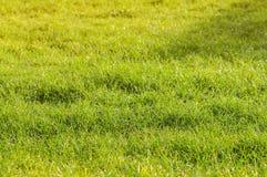 Het gebied van het gras Stock Afbeelding