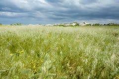 Het Gebied van het gras, Bewolkte Hemel royalty-vrije stock fotografie
