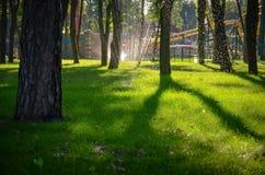 Het gebied van het gras in het park Royalty-vrije Stock Foto's