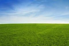 Het gebied van het gras met blauwe hemel royalty-vrije stock foto