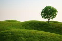 Het gebied van het gras met een boom Stock Afbeelding