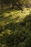 Het gebied van het grasonkruid in aard Stock Fotografie