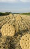 Het gebied van het koekje Stock Foto's
