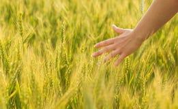 Het gebied van het landbouwbedrijf stock afbeeldingen
