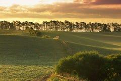 Het gebied van het landbouwbedrijf royalty-vrije stock afbeeldingen