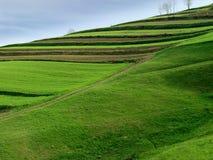 Het Gebied van het landbouwbedrijf met Weg royalty-vrije stock foto's