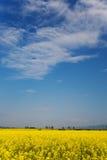 Het gebied van het oliezaad in bloei stock fotografie