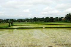 Het gebied van het padieveld - landschap Stock Afbeelding