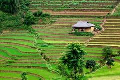 Het Gebied van het Padieveld van Vietnam Stock Foto's